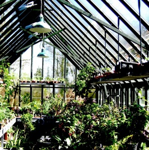 greenhouse, plants, English garden