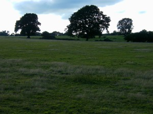 Silchester field and trees