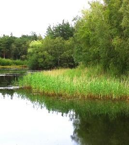 Bramshill lake
