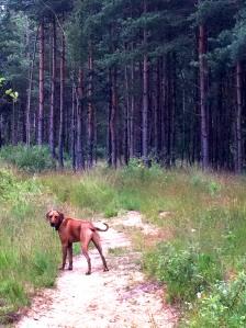 Bramshill Forest