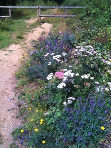 Wild flowers at Bramshill