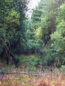 Bramshill woodland