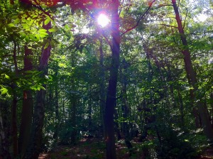 Sun through trees in woodland