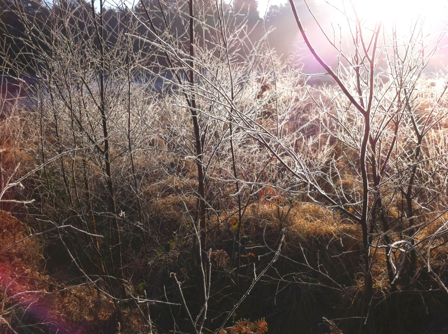 Magical frost at Simons Wood, Crowthorne