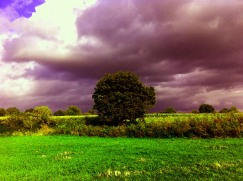 Heavy clouds with tree and field