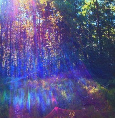 Diffused light through woodland