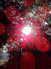 photo of light through trees