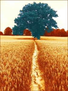 tree merge 2