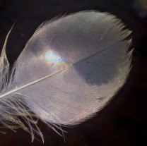 Swan 22