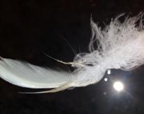 Swan 23