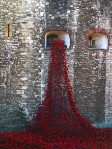 Tower poppies 15