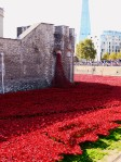Tower poppies 2
