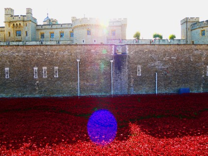 Tower poppies 6