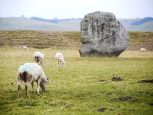 Avebury stones 11