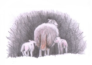 Lamb study 1