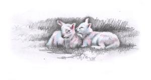 Lambs studynew2