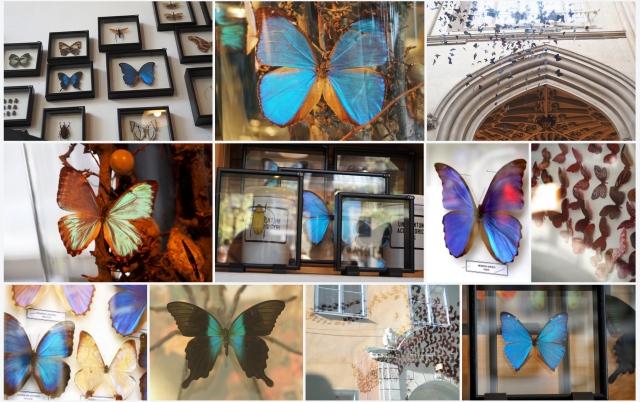 Glass butterflies II