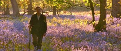howards-end-bluebells