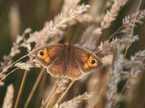 Butterfly 24.jpg