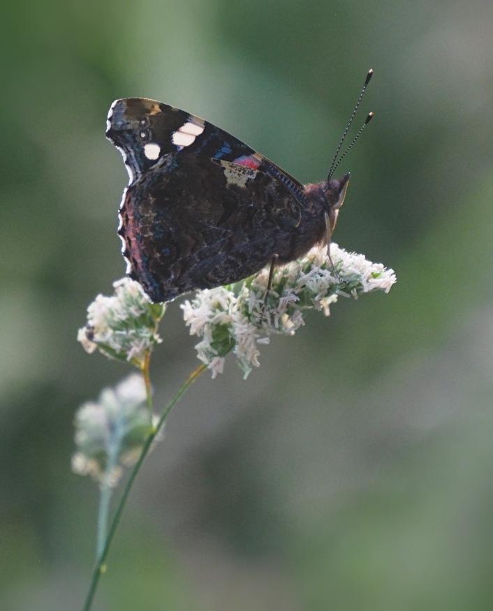 Butterfly walk 50.jpg